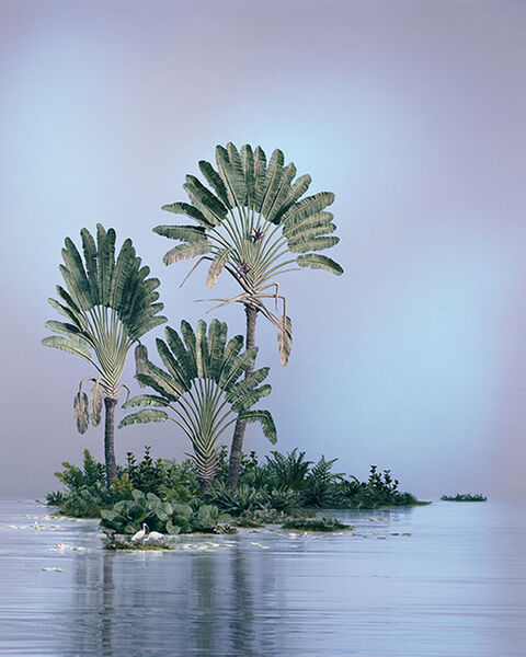 Didier Massard, 'Traveler Palms', 2014