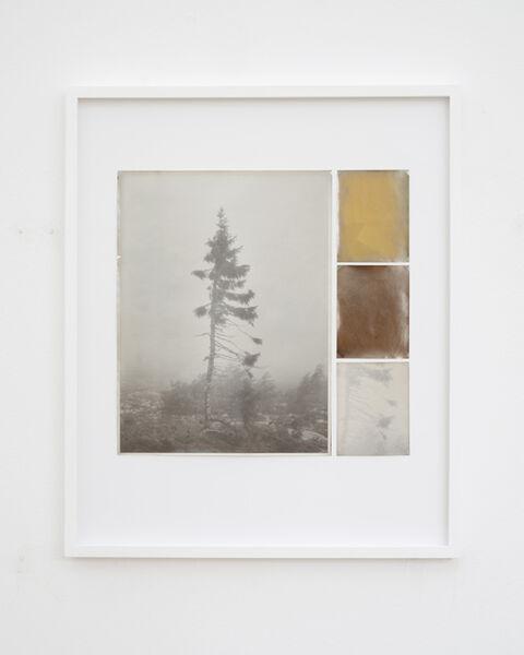 Nicolai Howalt, 'Old Tjikko, Collage 05', 2019
