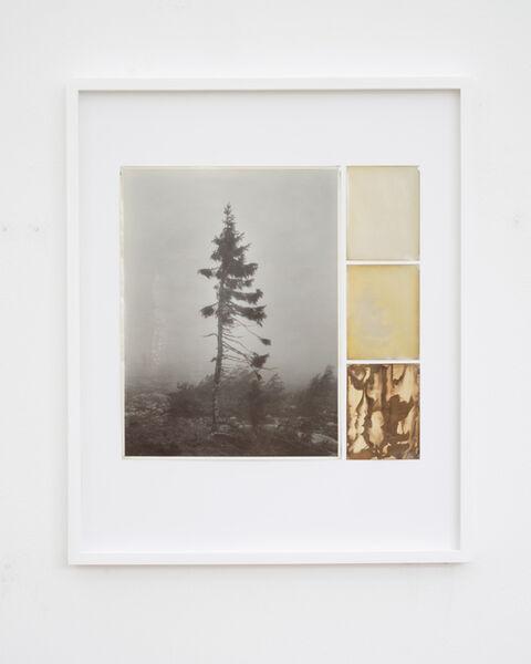 Nicolai Howalt, 'Old Tjikko, Collage 12', 2019