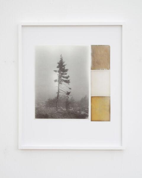 Nicolai Howalt, 'Old Tjikko, Collage 06', 2019