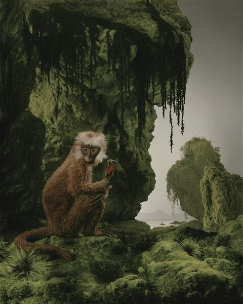 Didier Massard, 'Le Singe (The Monkey)', 2011