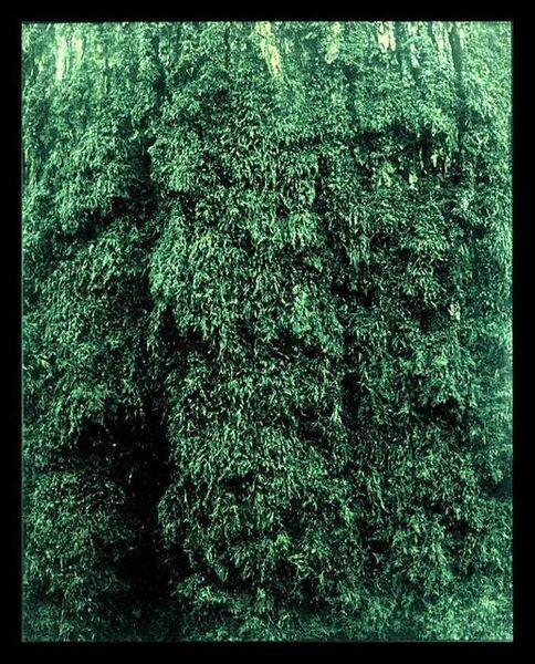 Eric Poitevin, 'Untitled', 1998