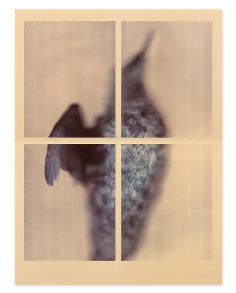 Ann Hamilton, 'Pigeon Guillemot', 2017