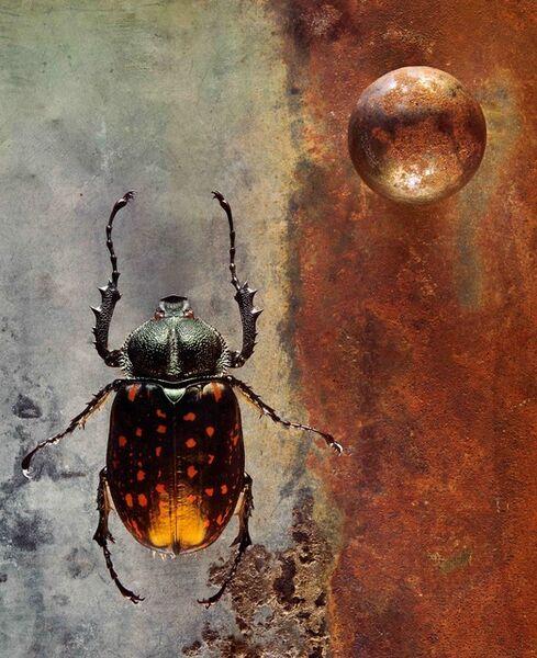 Jo Whaley, 'Coleoptera'