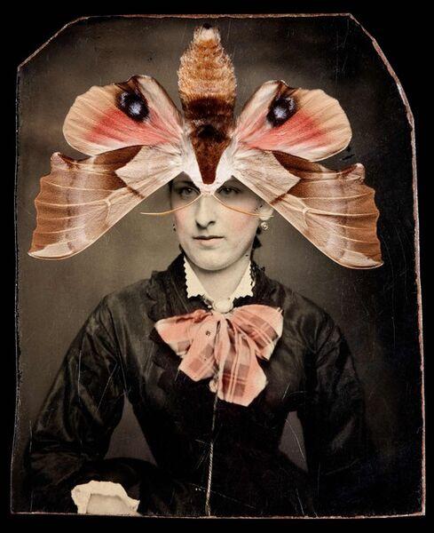Jo Whaley, 'Smerinthus saliceti'