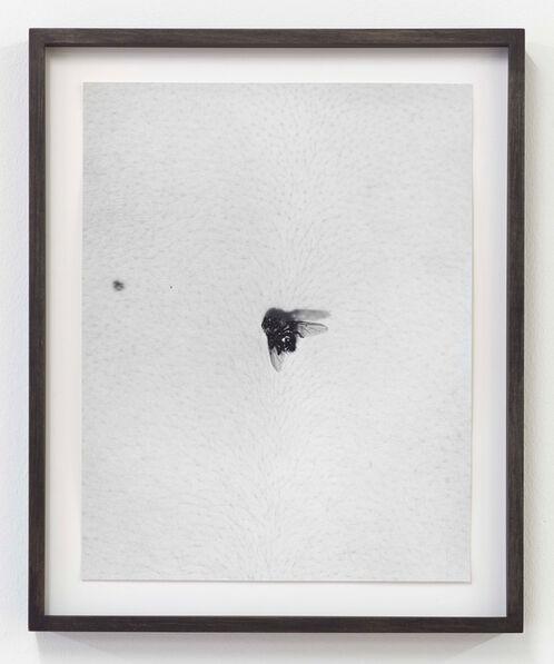 Talia Chetrit, 'Fly on Body', 2012