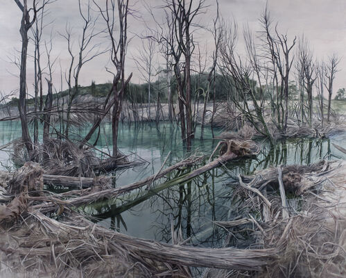Pond Requiem: Unstable Landscapes from Savage River, installation view