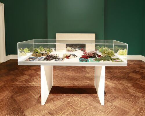 Jungled Up Gravity: Milena Muzquiz, installation view