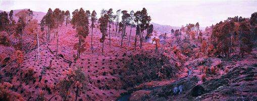 Richard Mosse, 'If I Ran The Zoo, North Kivu, Easter Congo', 2012
