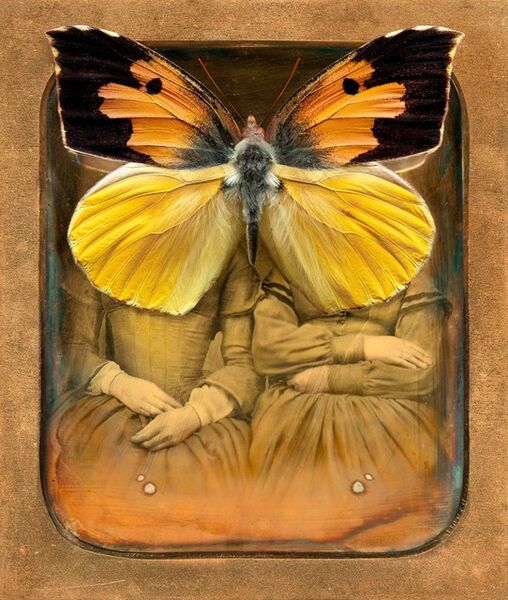 Jo Whaley, 'Colias Eurydice'