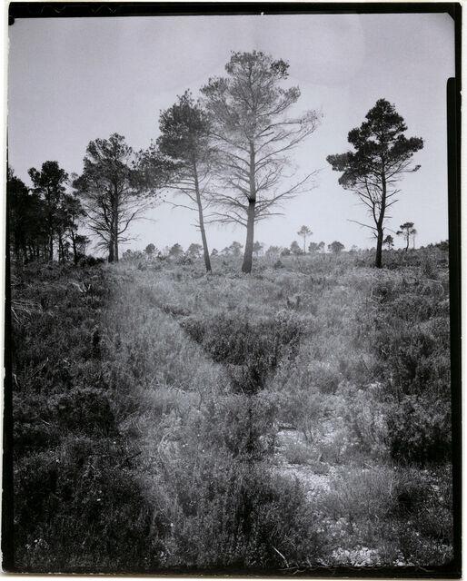 H. Callahan, Eleanor, Aix-en-Provence, France, 1958