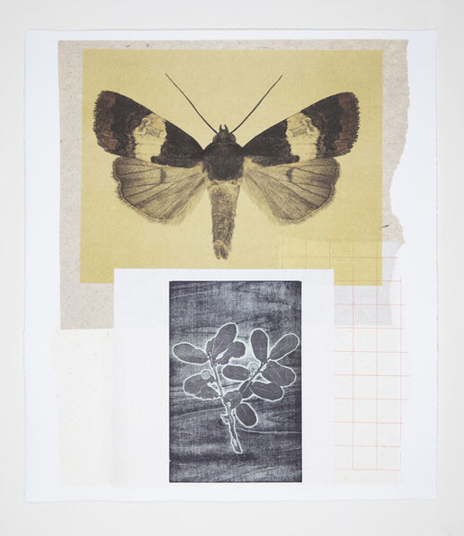 Joseph Scheer, 'Noctuid and Oak Moths', 2019