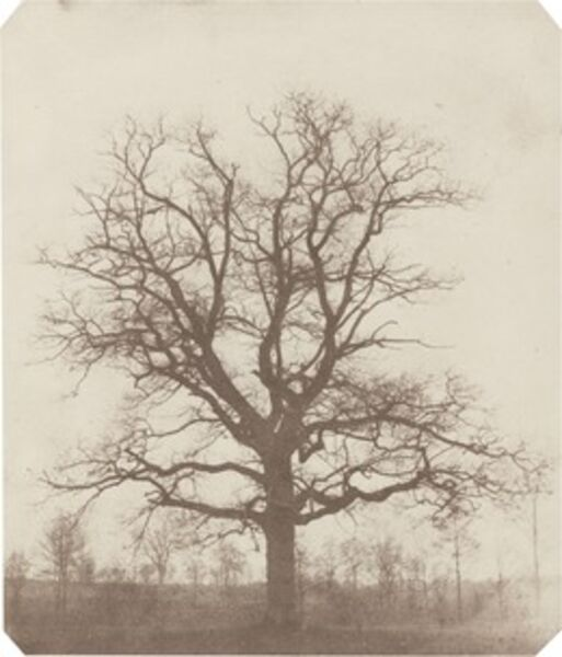 William Henry Fox Talbot, 'Oak Tree', mid 1840s