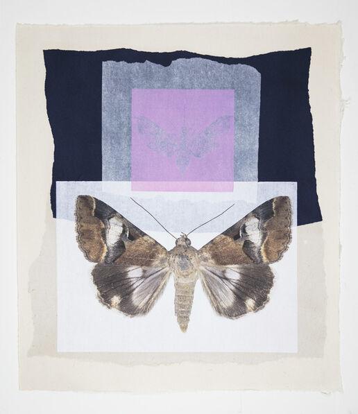 Joseph Scheer, 'Pink Hawk and Noctuid Moths', 2019