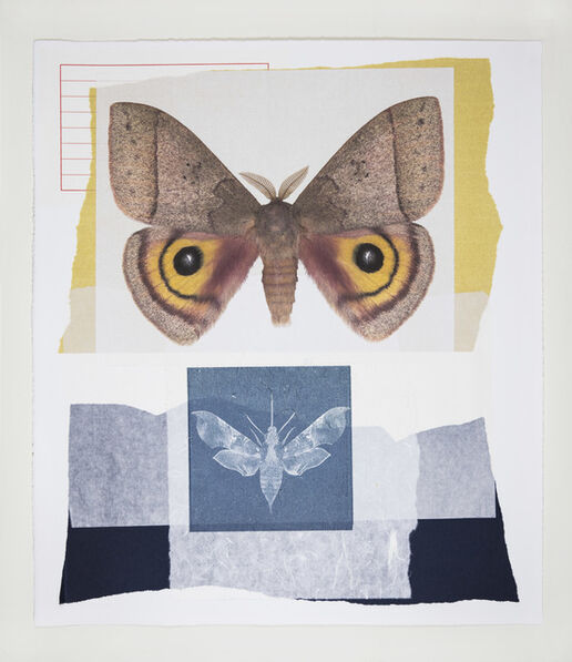 Joseph Scheer, 'Automeris Iris', 2019