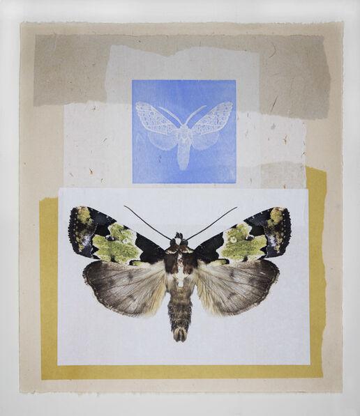 Joseph Scheer, 'Blue Tiger and Green Noctuid Moths', 2019