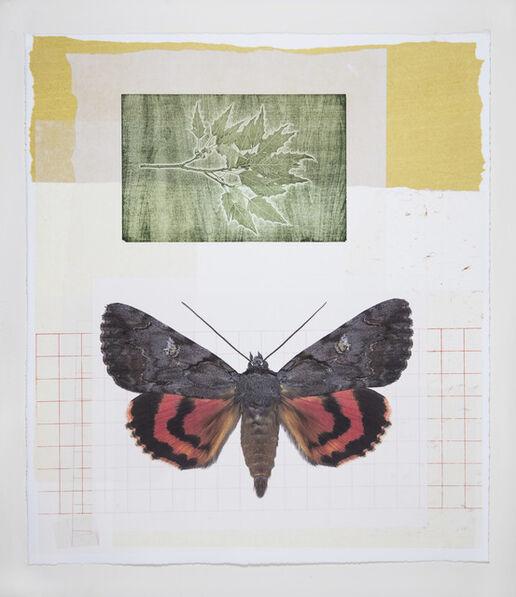 Joseph Scheer, 'Catacola and Oak Moths', 2019
