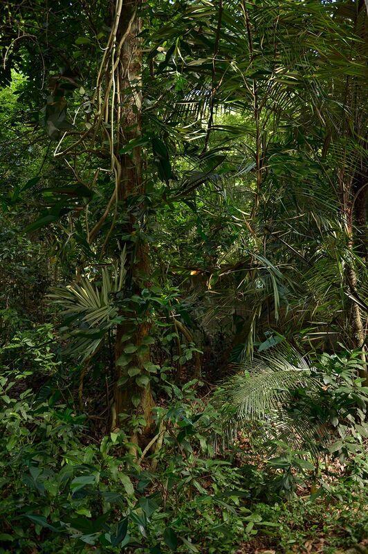 """Albano Afonso, 'Da série """"Cristalização da Paisagem"""", Rio de Janeiro, Junho de 2014 [From the series """"Landscape Crystallization"""", Rio de Janeiro, June 2014]', 2015, Photography, Fotografia [photography], Casa Triângulo"""