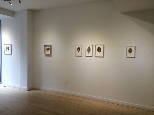 Natural Order- Susanna Bauer and Leigh Anne Lester, installation view