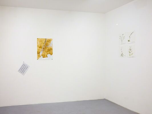 Seeds of Change: New York - A Botany Colonization, installation view