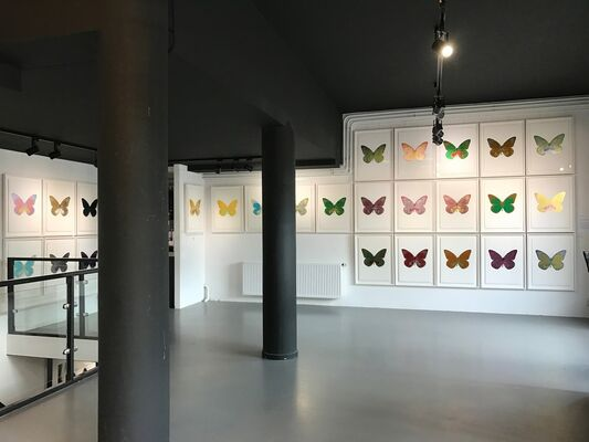 Damien Hirst - The art of, installation view