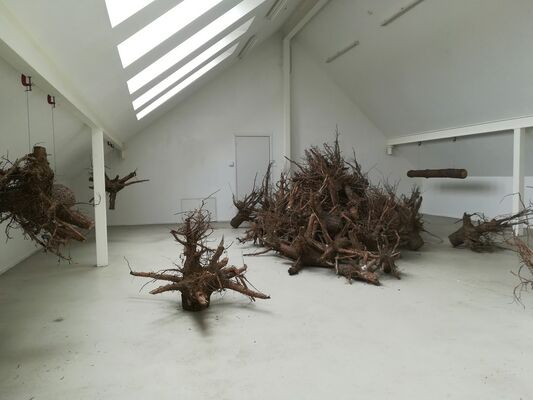 ROOTS by Danielius Sodeika, installation view