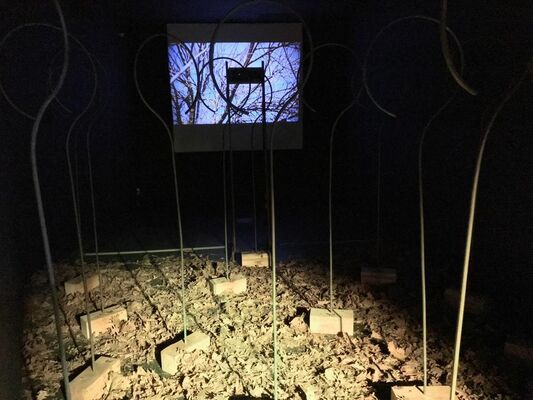 TRONCO SONICO | FORESTA SONICA, installation view