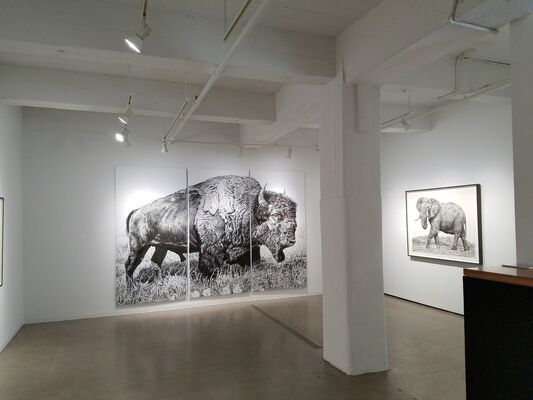 Drawings, Rick Shaefer, installation view