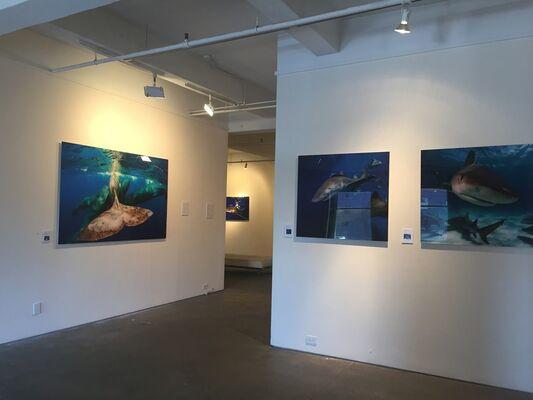 Alberto Luca Recchi: SEXY SHARK curated by Gloria Porcella, installation view