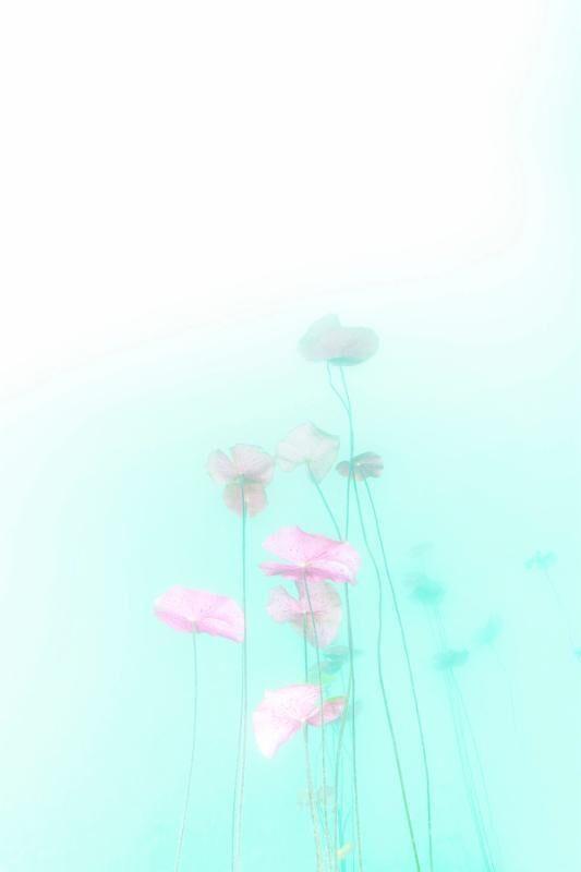 Chris Leidy, 'Purple Pads 2', 2016, Photography, Archival pigment print, ARC Fine Art LLC