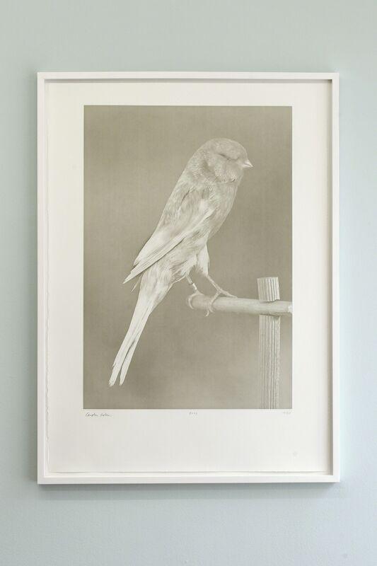 Carsten Höller, 'Canaries (1)', 2009, Print, Photogravure on Somerset 300 gr., Studio Voltaire