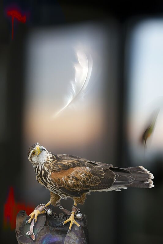 Olivia Parker, 'Falcon with Bells', 2012, Photography, Epson Ultrachrome print, Robert Klein Gallery