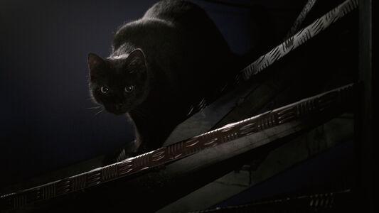 Adel Abdessemed, 'Un chat noir passe entre nous', 2018