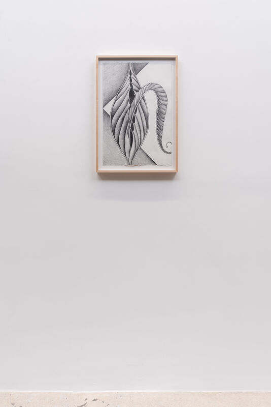 Faith Wilding, 'Fossil #8', 2020, Drawing, Collage or other Work on Paper, Graphite on paper, framed, Anat Ebgi