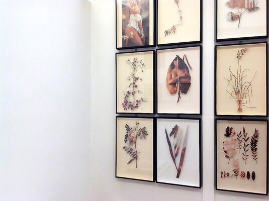 Paolo Giardi: The Botanist {You Can Learn a Lot of Things From the Flowers}, installation view