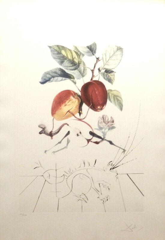 Salvador Dalí, 'FlorDali/Les Fruits Eve's Apple ', 1969, Print, Etching, Fine Art Acquisitions Dali