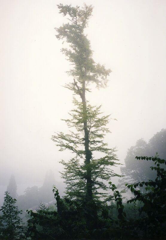 Jitka Hanzlová, 'Untitled (Beech Tree)', 2010, Photography, Chromogenic print, Yancey Richardson Gallery
