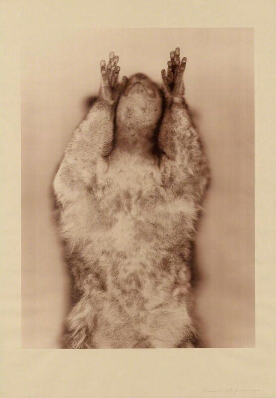 Ann Hamilton, 'Brown Greater Galago (Sepia)', Print, 10-color screenprint, Gemini G.E.L. at Joni Moisant Weyl