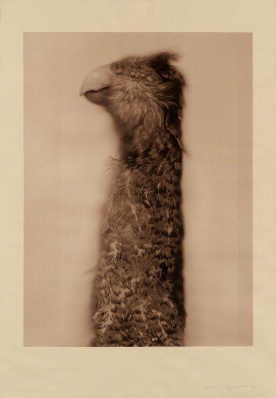 Ann Hamilton, 'Kakapo Ground Parrot (Sepia)', 2017, Print, 9-color screenprint, Gemini G.E.L. at Joni Moisant Weyl