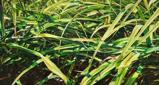 Ray Kleinlein, 'Grass (for Walt Whitman)', 2020