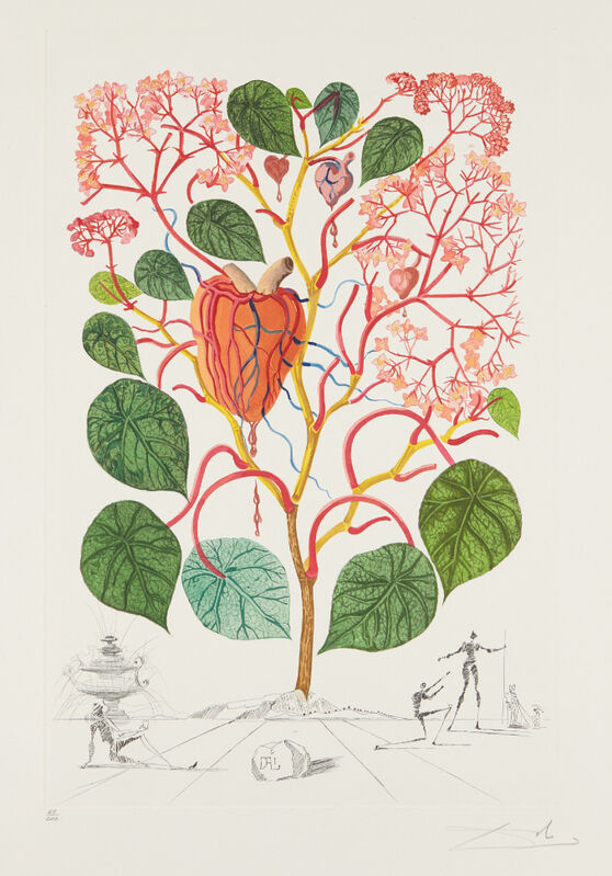 Salvador Dalí, 'Begonia (Anacardium recordans), from Flordali® (Flora Dalinae)', 1968, Print, Etching with drypoint in colors, on Arches paper, with full margins, Phillips