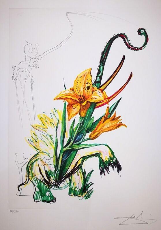 Salvador Dalí, 'Elephant Lily ', 1972, Print, Lithograph on Paper, Illuminati Fine Art