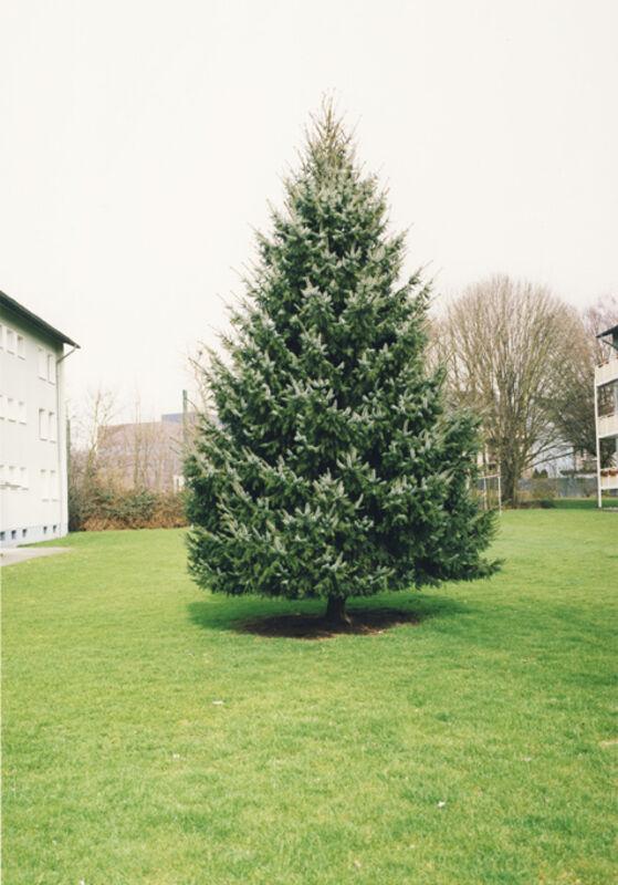 Jitka Hanzlová, 'Untitled (Christmas Tree)', 2009, Photography, C-print, Mai 36 Galerie