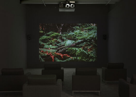Lothar Baumgarten: The Early Years, installation view