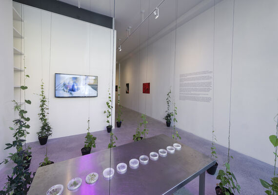 At the Temperature of My Body, installation view