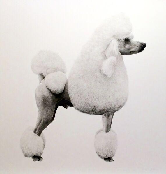 Jonathan Delafield Cook, 'Poodle I', 2016