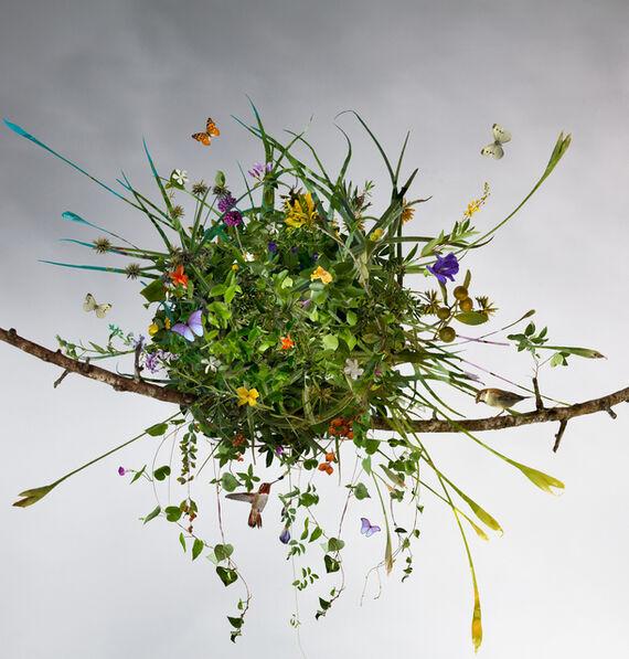 Ysabel Lemay, 'The Summer Nest'