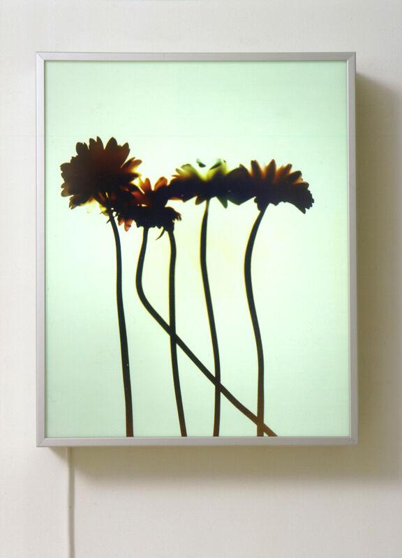 Matt Mullican, 'Untitled (Experiments with Light)', 2001, Mixed Media, Duratrans in lightbox, Mai 36 Galerie