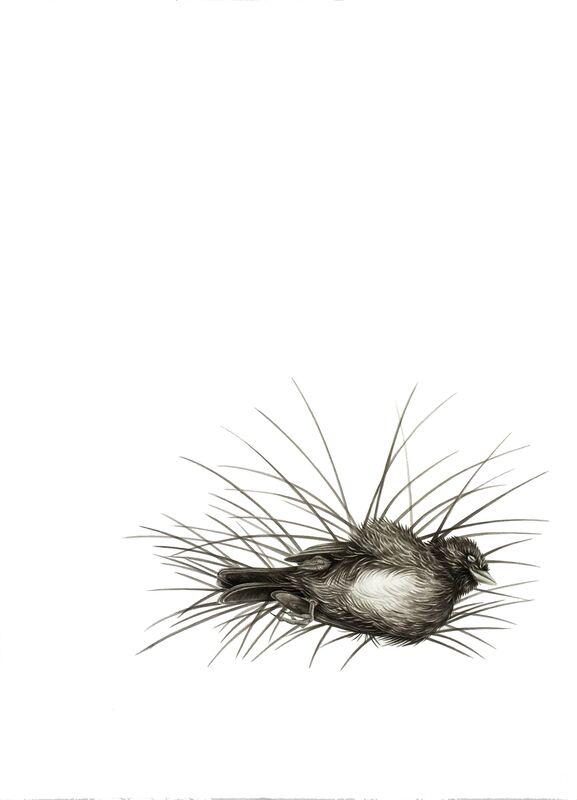 Çağla Köseoğulları, 'Untitled', 2015, Drawing, Collage or other Work on Paper, Ink, Sanatorium