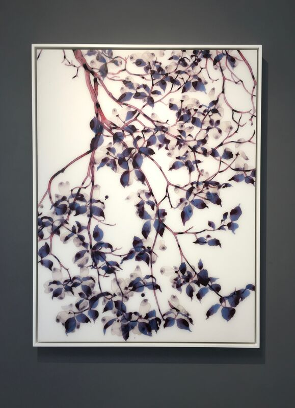 Jackie Battenfield, 'Under a Cloud cs1', 2018, Painting, Acrylic on mylar mounted on acrylic panel, Kenise Barnes Fine Art